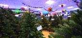 Фото 05: Магазин новогодних товаров.